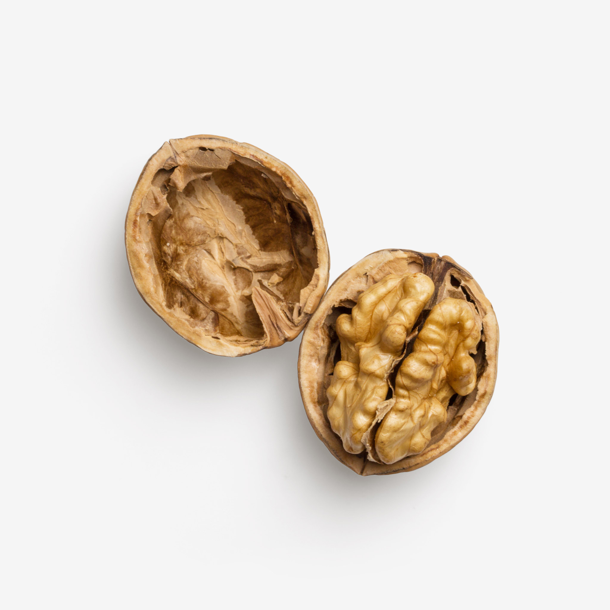 Walnut PSD image with transparent background