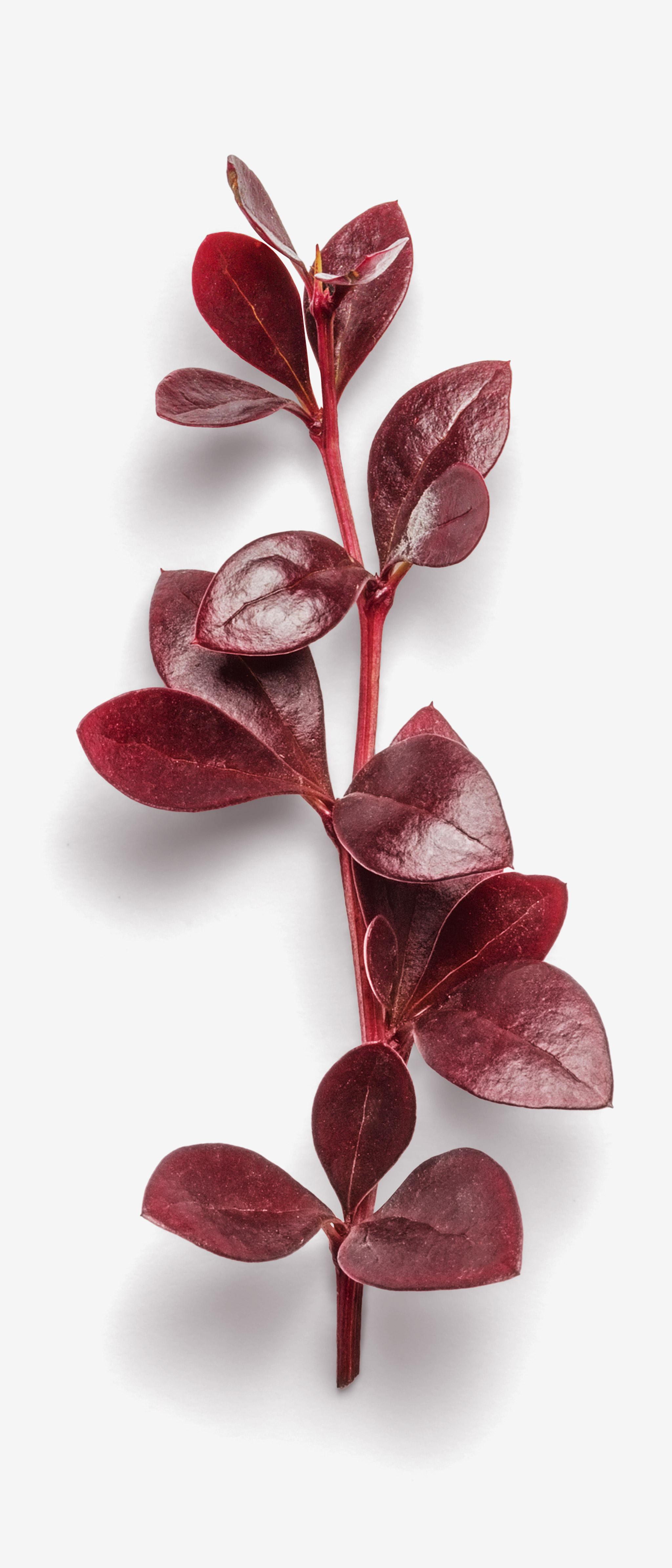 Leaf PSD layered image