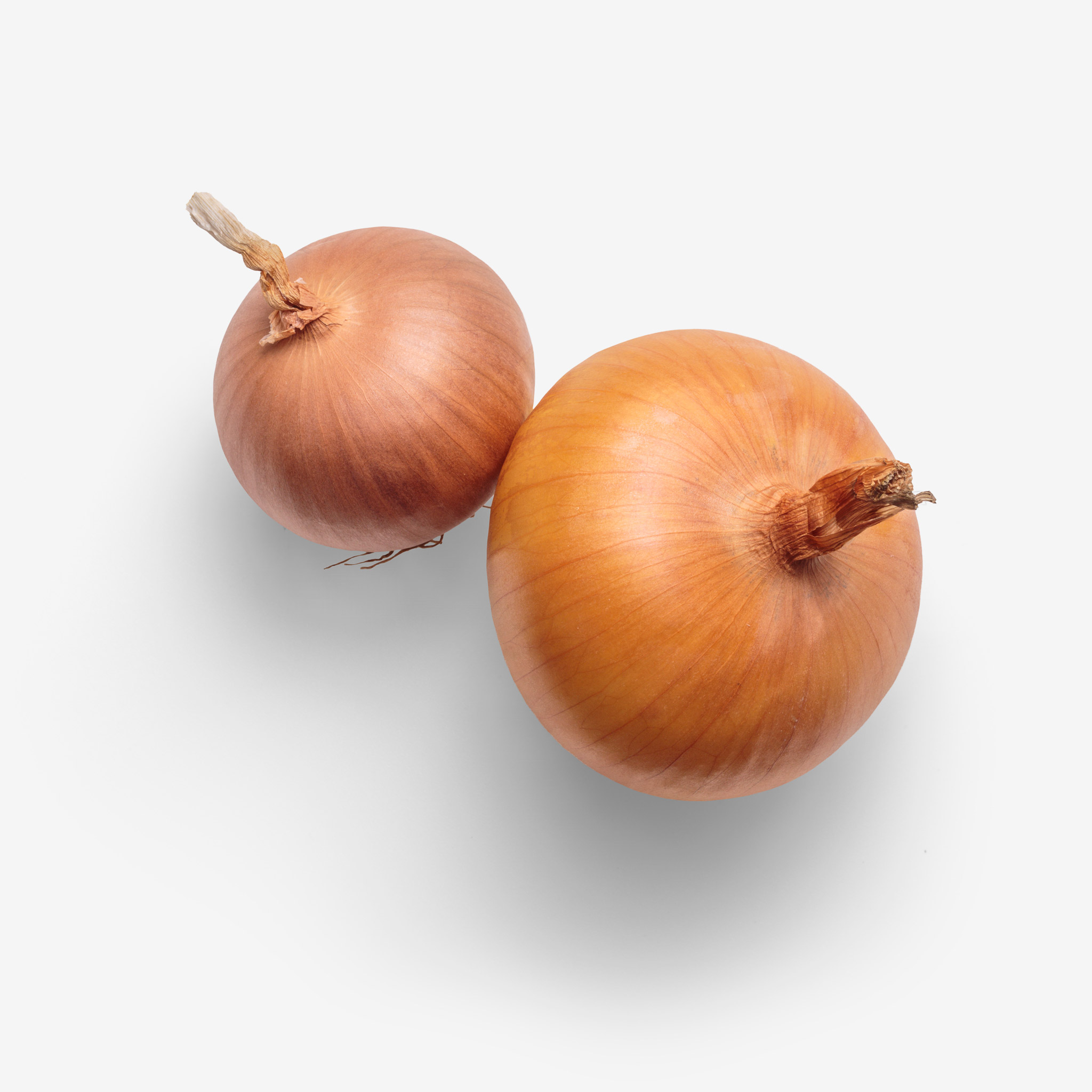 Onion PSD isolated image