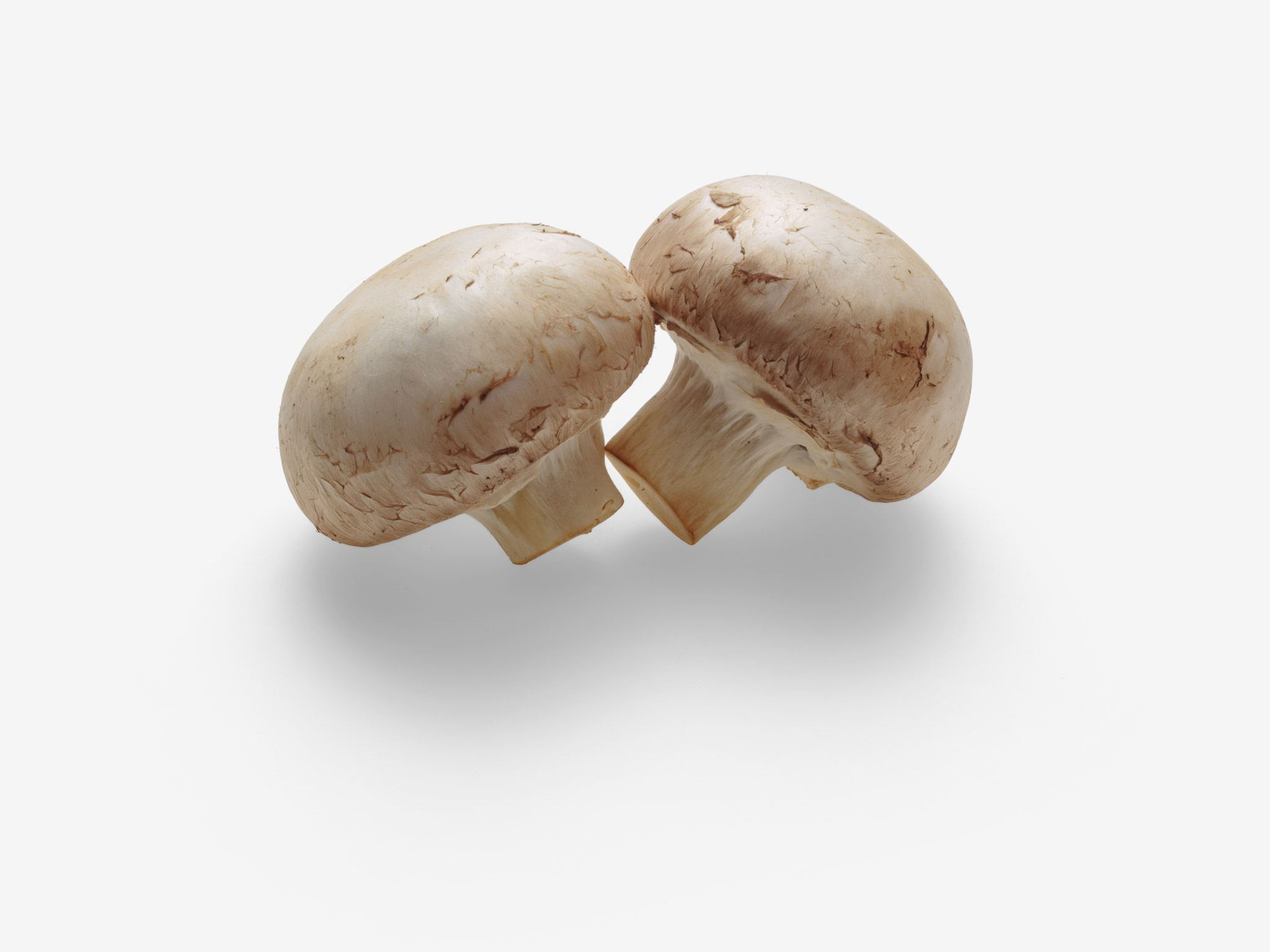 Champignon PSD image with transparent background