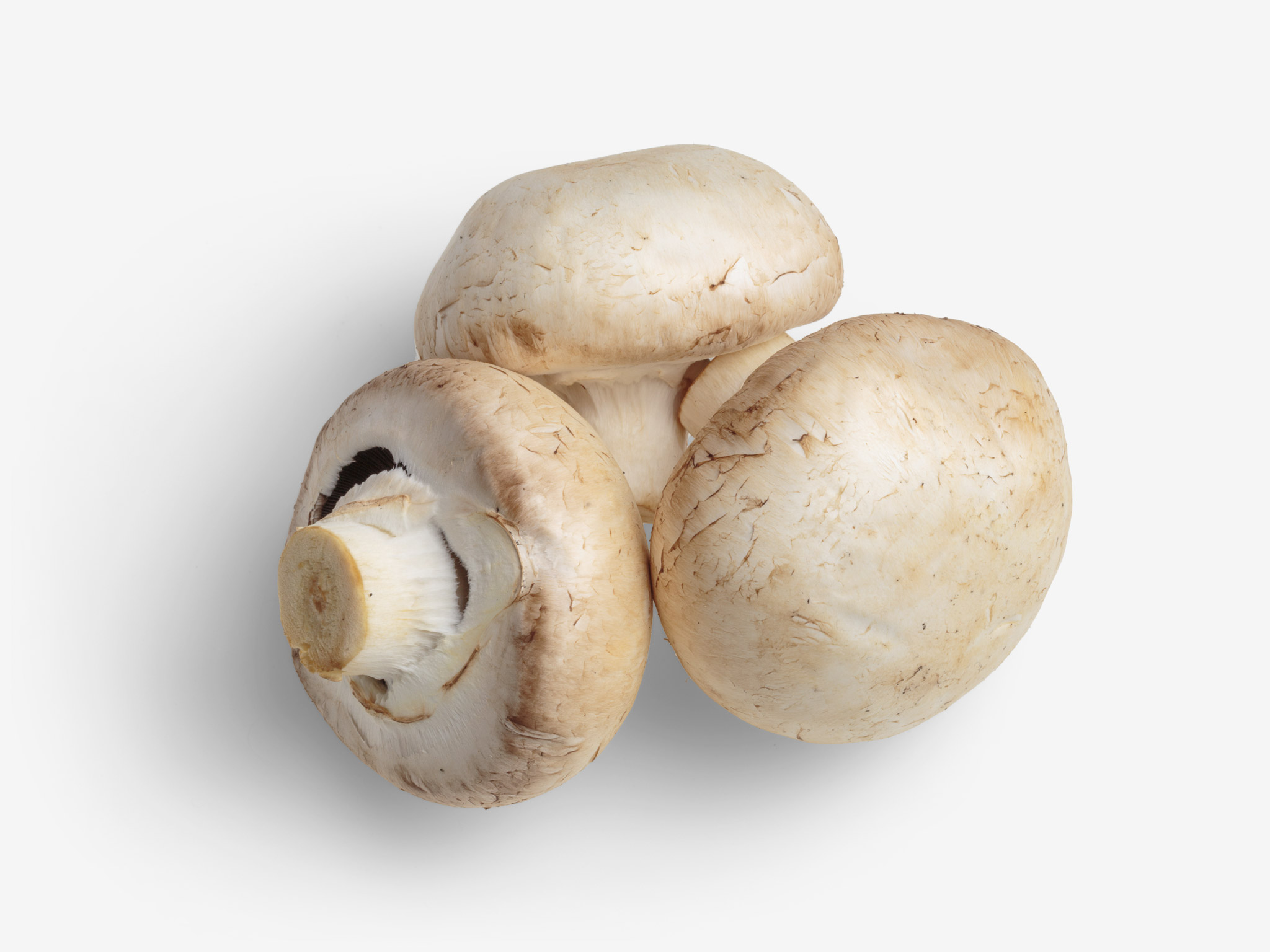 Champignon PSD isolated image