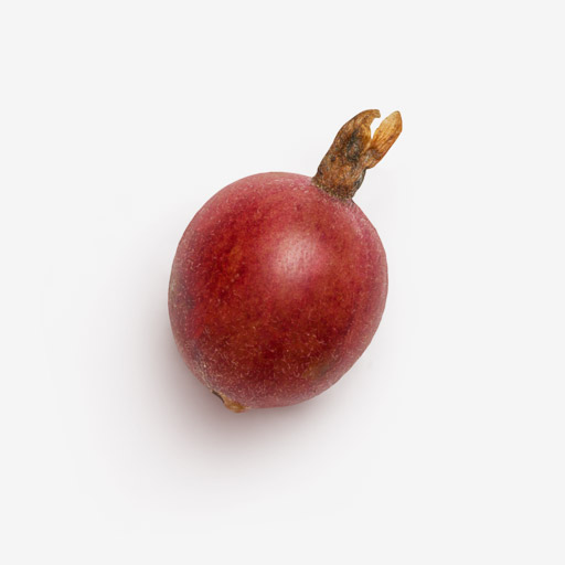 Gooseberry image with transparent background